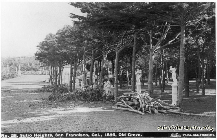 Sutro Heights. View of perimeter drive with Old Grove at right