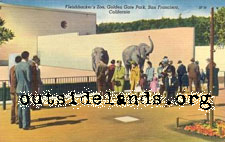 Elephants at Zoo postcard
